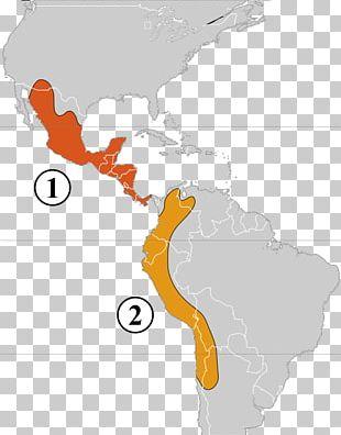 United States Of America Latin America South America Spanish Language Region PNG