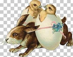 Easter Bunny Domestic Rabbit Easter Postcard Happy Easter! PNG
