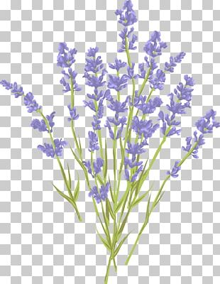 Lavender Euclidean Illustration PNG