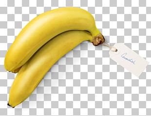 Banana Split Cooking Banana Cavendish Banana Banana Plantation PNG