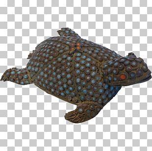 Box Turtle Tortoise Snapping Turtles Loggerhead Sea Turtle PNG