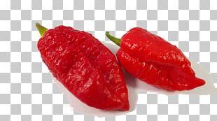 Habanero Piquillo Pepper Bird's Eye Chili Tabasco Pepper Cayenne Pepper PNG
