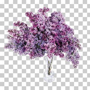 Lilac Purple Lavender PNG