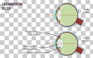 Glasses Accommodation Eye Lens Light PNG