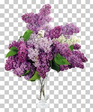Common Lilac Flower Bouquet Desktop PNG