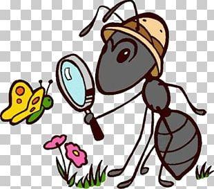 Ant English Instiz Multiple-criteria Decision Analysis Day PNG