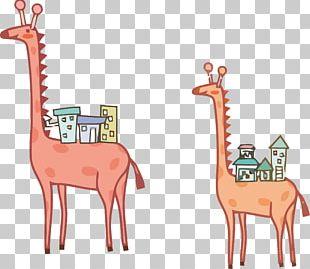 Northern Giraffe Illustrator Illustration PNG
