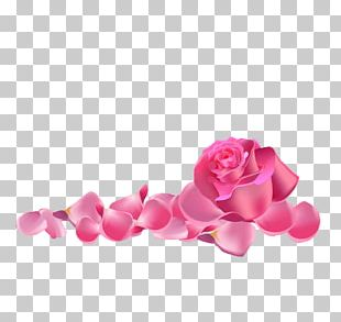 Garden Roses Beach Rose Pink PNG
