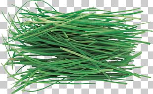 Vegetable Herb Allium Fistulosum Pianta Aromatica Onion PNG