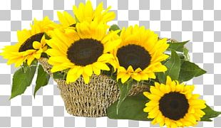 Common Sunflower Flower Bouquet Sunflower Seed Cut Flowers PNG