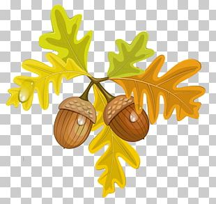 Acorn Autumn Leaf PNG