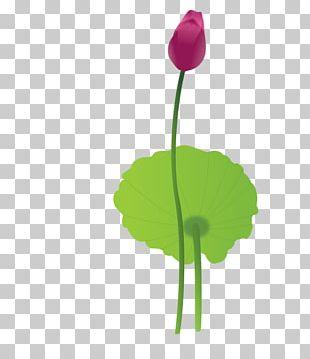 Petal Leaf Plant Stem Flowering Plant PNG