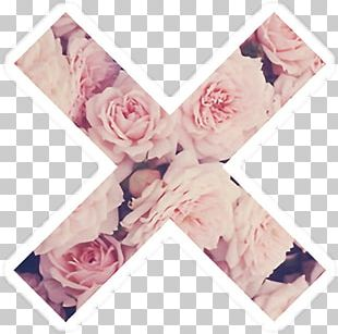 Desktop Rose Pink Flowers PNG