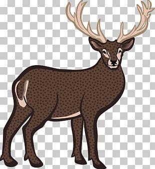 Reindeer White-tailed Deer Bison Elk PNG