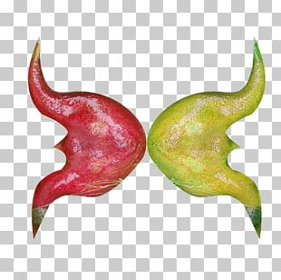 Water Caltrop Chili Pepper Red PNG