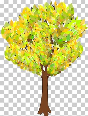 Tree Autumn Branch PNG