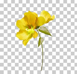 Cut Flowers Yellow White Green PNG