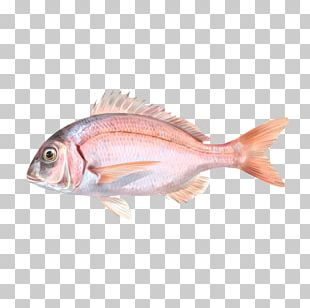 Northern Red Snapper Common Pandora Fish Tilapia Red Seabream PNG