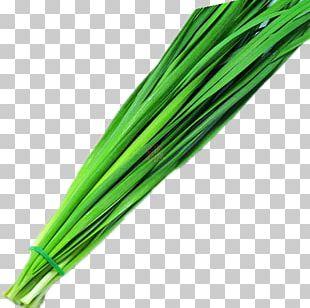 Allium Fistulosum Scallion Food Vegetable PNG