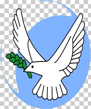 Olive Branch Petition Columbidae Symbol PNG