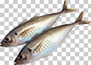 Fish Food Sardine Meat PNG