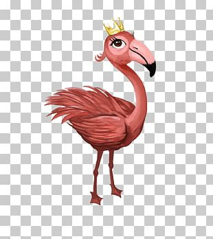 Water Bird Chicken A Little Boy With A Big Imagination Flamingo PNG