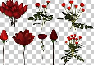 Garden Roses Tulip Cut Flowers Floral Design PNG