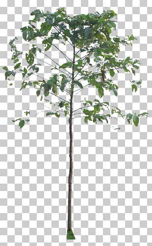 Twig Plant Stem Leaf PNG