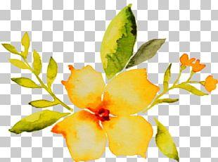 Petal Cut Flowers Watercolor Painting Plant Stem PNG