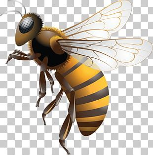Western Honey Bee Africanized Bee Bee Removal Bee Sting PNG