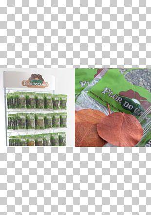 Vegetarian Cuisine Hibiscus Tea Matcha Green Tea PNG