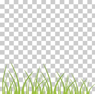 Green Grass Decoration Illustration Background PNG