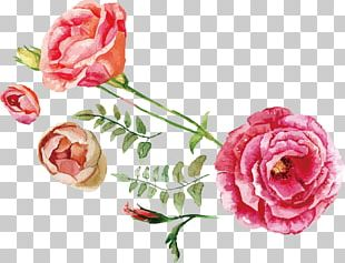 Rose Flower Bouquet Illustration PNG