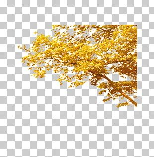 Tree Autumn Deciduous Computer File PNG