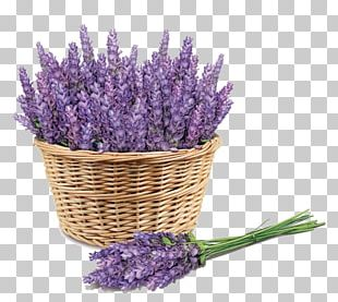Sunscreen Lavender Face Skin Price PNG
