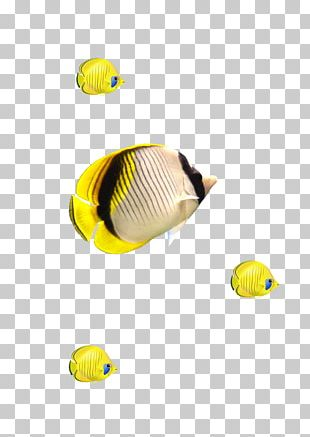 Fish Yellow Euclidean Computer File PNG