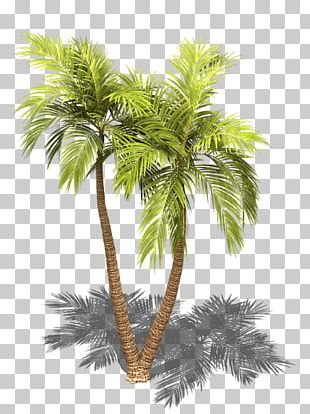 Asian Palmyra Palm Arecaceae Sprite Tree Isometric Projection PNG