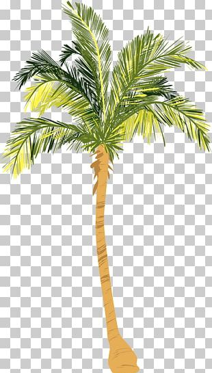 Tree Nut Allergy Arecaceae Coconut Woody Plant PNG