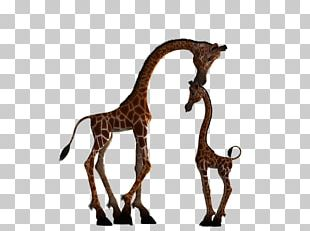 Giraffe Mother Child Infant Silhouette PNG