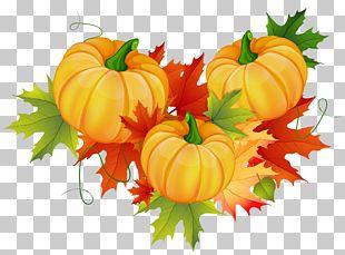 Pumpkin Thanksgiving PNG