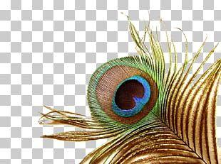 Bird Wedding Invitation Peafowl Feather Printmaking PNG