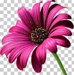 Floristry Cumbernauld Flower Floral Design PNG