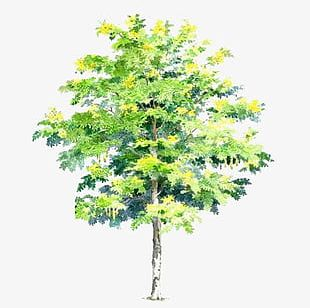 Hand-painted Trees S PNG