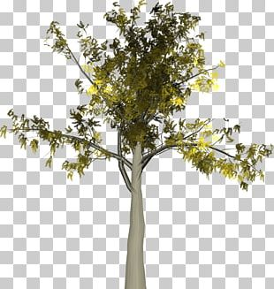 Autumn Twig Tree Leaf PNG