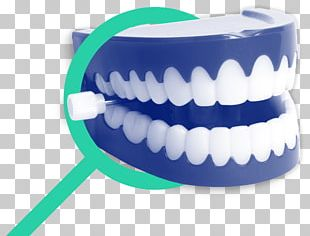 Chattery Teeth Stock Photography Wind-up Toy Human Tooth PNG