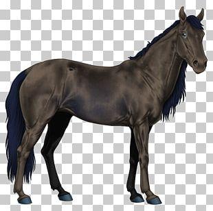 Mustang American Paint Horse Stallion Arabian Horse American Quarter Horse PNG