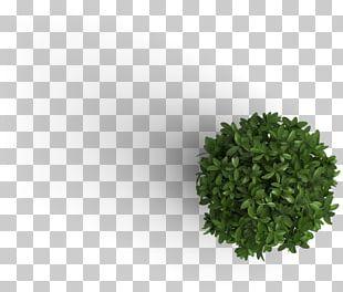Plant M B Jarvie Ltd. Information Tree PNG