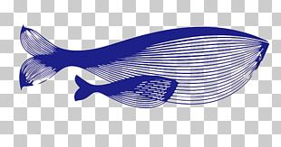 Blue Whale PNG