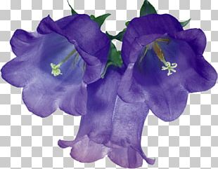 Cut Flowers Floral Design Blue PNG