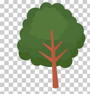 Silver Birch Tree Euclidean Resource PNG